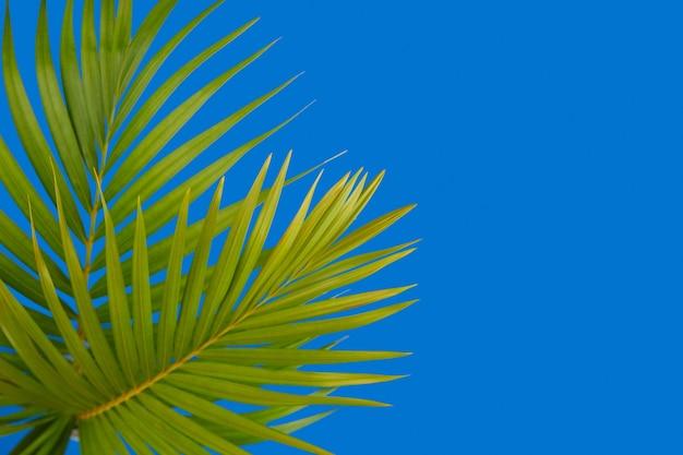 Layout criativo com folhas de palmeira tropical em fundo azul