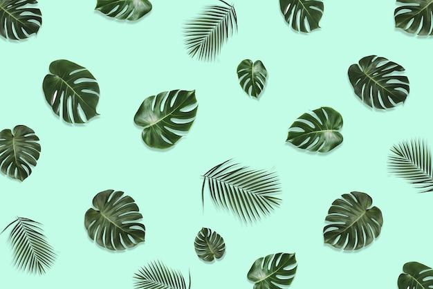 Layout criativo feito de folhas de monstera tropical em fundo pastel. conceito exótico de verão mínimo