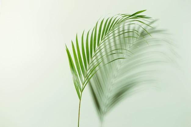 Layout criativo feito de folhas tropicais coloridas em fundo branco. verão mínimo
