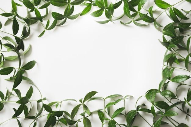 Layout criativo feito de folhas verdes com branco vazio para nota em branco