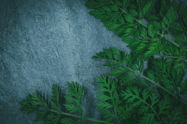 Layout criativo feito de grama da floresta no xisto preto