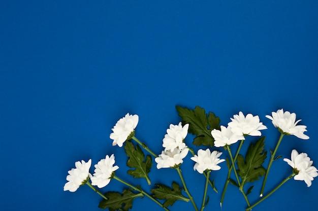 Layout de bela flor. flores brancas em um espaço azul. feliz dia das mulheres, dia das mães. vista plana, vista superior, cópia espaço