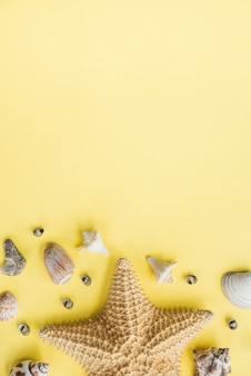 Layout de estrela do mar perto de conchas