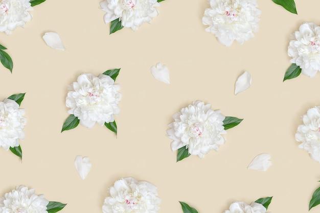 Layout de flores de peônia frescas com pétalas brancas em fundo bege claro vista superior das peônias de flores
