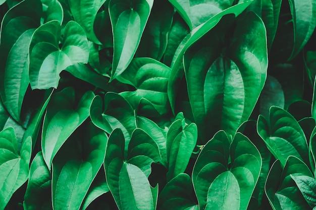 Layout de folhas verdes tropicais verdes.