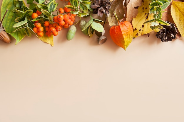 Layout de outono em um fundo bege. folhas verde-amarelo, sorveira, bolotas. copie o espaço