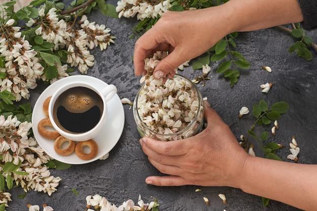 Layout de primavera com café na mesa e flores de acácia branca. mãos femininas despeje flores de acácia em um copo