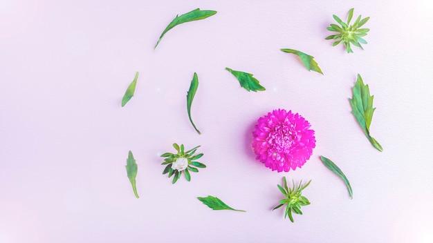 Layout plano leigo com belas flores rosa roxas em fundo pastel. cartão de convite. copie o espaço para texto, banner