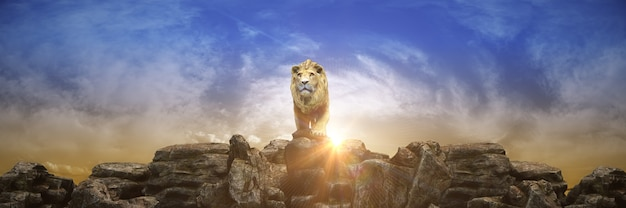 Leão ao pôr do sol renderização em 3d