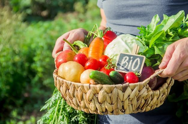 Legumes caseiros nas mãos dos homens. colheita. foco seletivo.