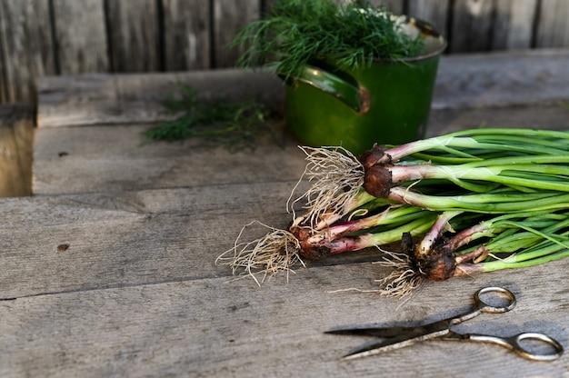 Legumes colhidos orgânicos frescos. cenário rústico. foco seletivo