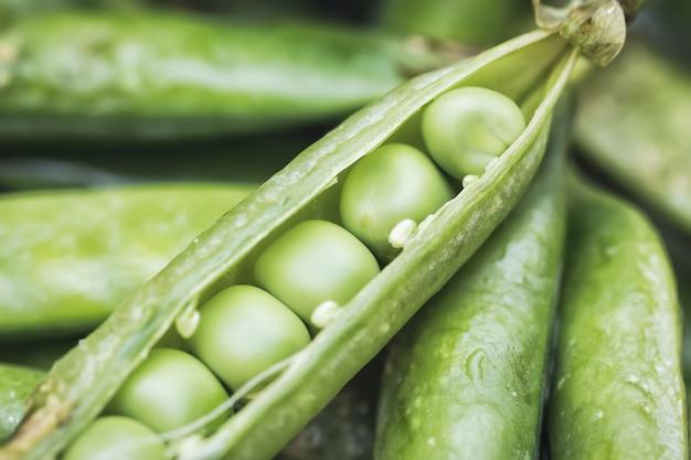 Legumes de ervilhas verdes. um pod é aberto com sementes closeup extrema