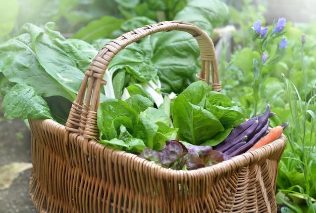 Legumes frescos em uma cesta de vime colocados em uma horta Foto Premium