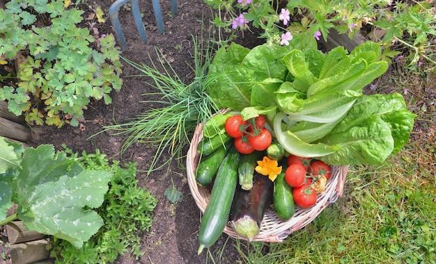 Legumes frescos em uma cesta de vime em um jardim Foto Premium