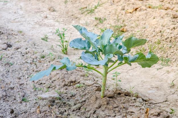 Legumes frescos em uma horta orgânica