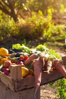 Legumes orgânicos da horta caseira