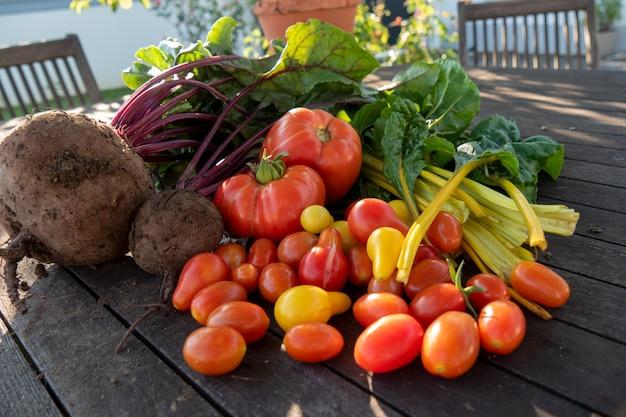 Legumes orgânicos de jardim, beterraba, acelga e tomate