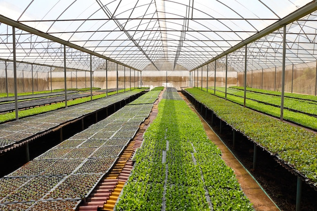 Legumes orgânicos em estufas