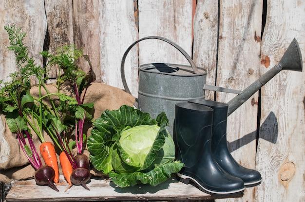 Legumes orgânicos frescos e saudáveis