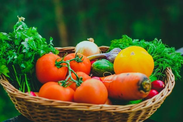 Legumes orgânicos frescos na cesta