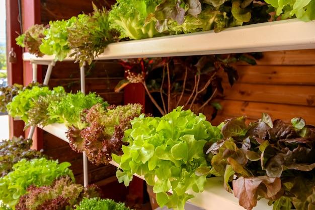 Legumes orgânicos no mercado de prateleira