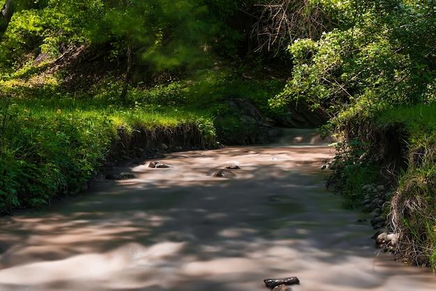Leito de um rio rápido na floresta