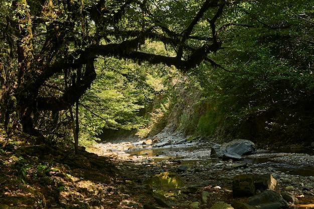 Leito rochoso de um riacho de montanha em um desfiladeiro em uma floresta tropical
