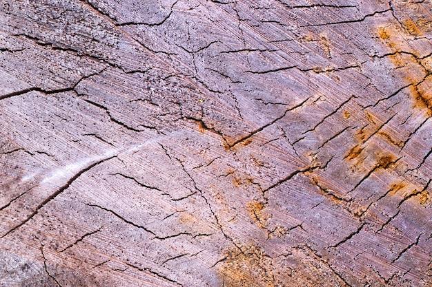 Lenha e foto de madeira textura da madeira empilhada