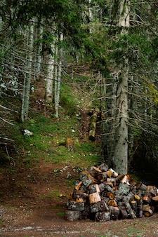 Lenha no gramado da floresta