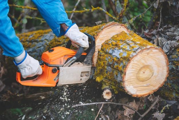 Lenhador cortando madeira velha com uma serra elétrica
