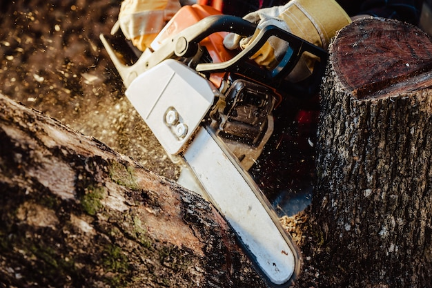 Lenhador serra árvore com motosserra na serraria