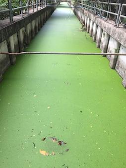 Lentilha d'água completa no canal de drenagem