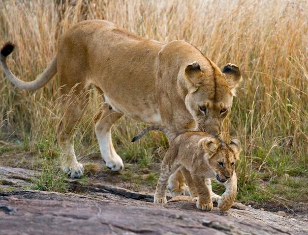 Leoa e seu filhote em uma grande rocha