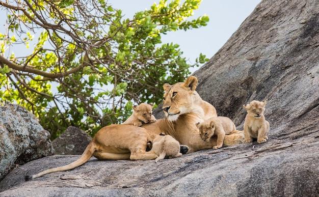 Leoa e seus filhotes em uma grande rocha.