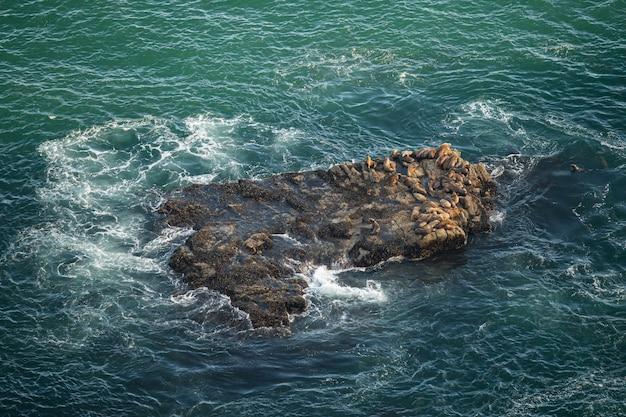 Leões marinhos, em, ponto, reyes, califórnia, eua