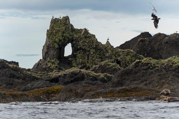 Leões marinhos steller, (eumetopias, jubatus), ligado, a, costa, skeena-queen, charlotte, distrito regional, haida