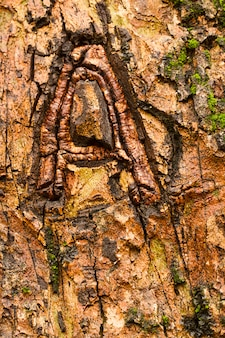 Letra a esculpida na árvore