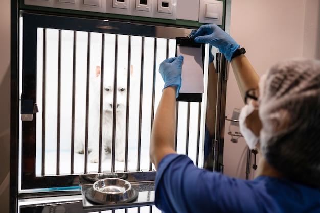 Levando cachorro para passear. veterinário com luvas azuis e uniforme levando o cachorro para fora da caixa para cirurgia