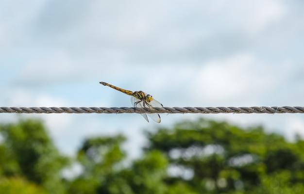 Libélula listrada de preto e amarelo sentada em uma corda de varal sob o céu azul