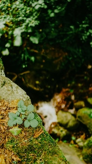 Licença verde da primavera com bokeh de fundo fresco e verde deixa o foco seletivo e o fundo desfocado. foco seletivo