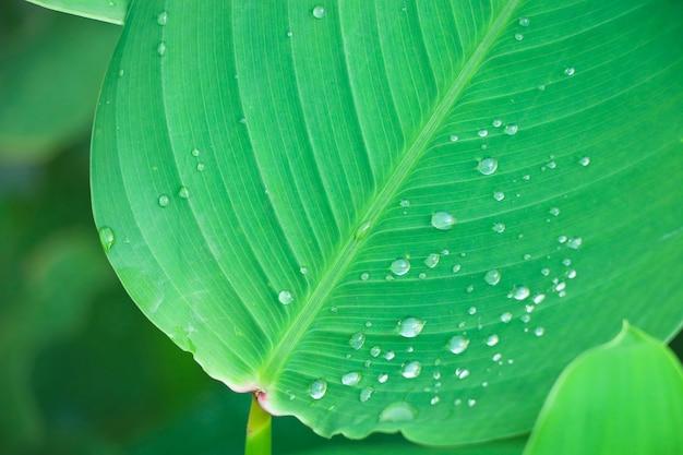 Licença verde e textura bonita na natureza com design de frescor de gotas de chuva