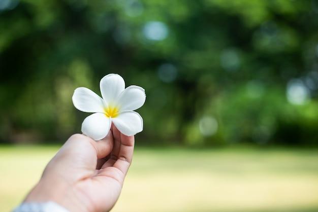 Lidar com plumeria flor com bokeh de fundo