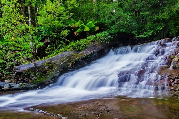 Liffey falls state reserve na região de midlands de tasmânia, austrália.