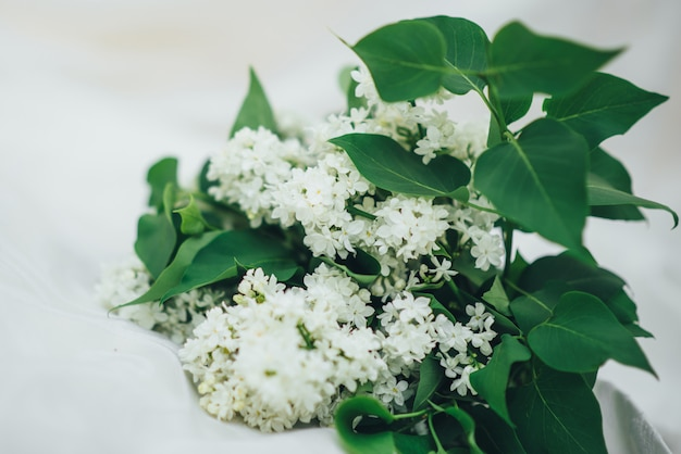 Lilás branco