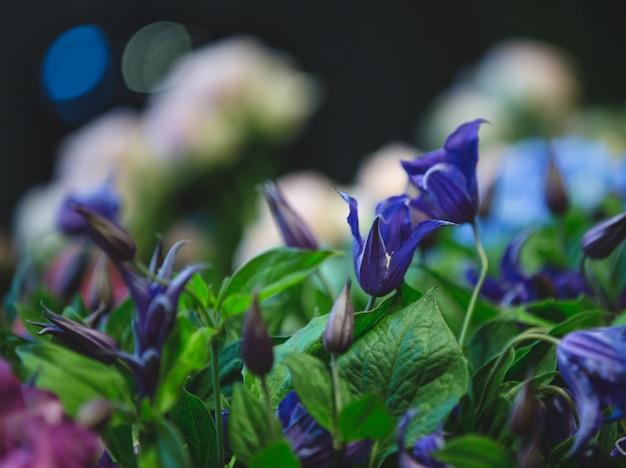 Lilás roxos com folhas verdes, vista da câmera em um estúdio