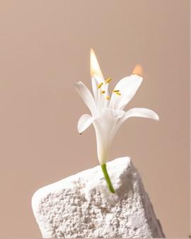Lilium é um gênero de planta herbácea com fogo, arte criativa moderna natureza morta