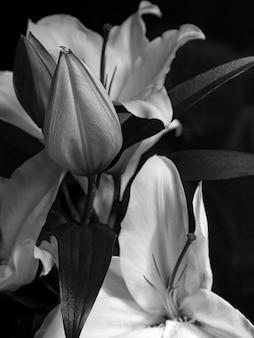 Lily solta em preto e branco. papel de parede monocromático