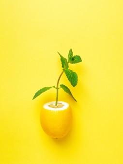 Limão maduro com hortelã em fundo amarelo