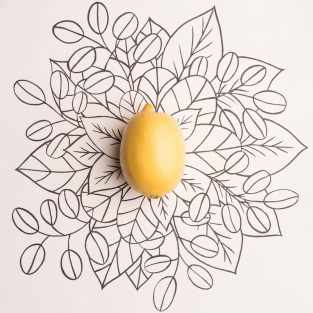 Limão sobre fundo floral contorno
