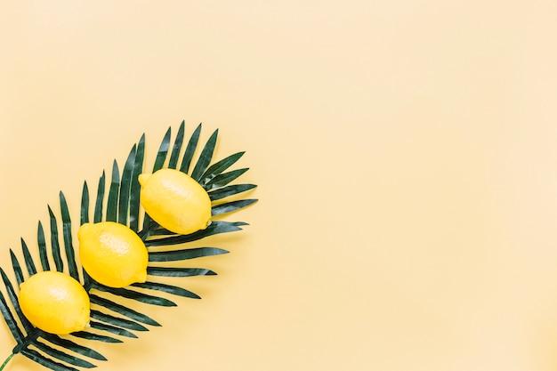 Limões inteiros na folha de palmeira